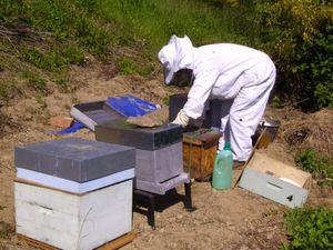 Installation des ruches à la section crèt du loup par Serge Bresse