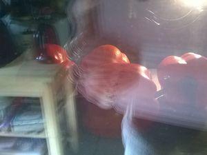Mettez les poivrons au four à 200°C ,sur une plaque recouverte de papier de cuisson , tournez les de temps en temps , attention de ne pas vous brûler, laissez les jusqu'à ce que le dessus soit grillé.