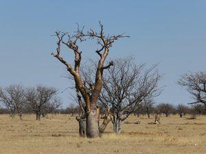Forêt de moringas
