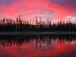 Coucher de soleil sur notre lac - Sunset on our lake. Nid de harles. Merganser nesting.