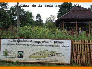 Foulées du Laos 2014. Course dans le plateau des Boloven..