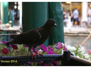 Italie 2014. Arrivée à Venise.