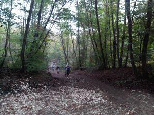 VENEUX LES SABLONS - Fontainebleau
