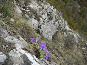 les fleurs  de l'Arpette