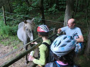 Pause chevaline : ces braves bêtes sont venues observer les cavaliers du 21ème siècle.