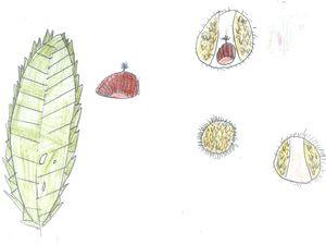 Quelques dessins de mes CE2 … Merci pour votre aide !