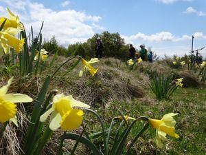 Les Hautes Chaumes au printemps sont fleuries et magnifiques, même si la température est un peu fraîche.
