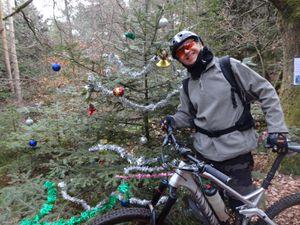 Rencontre avec un sapin de Noël peu avant d'arriver au Mont Sainte Odile.