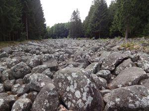 Visite du Champ de Roches, une curiosité géologique locale.