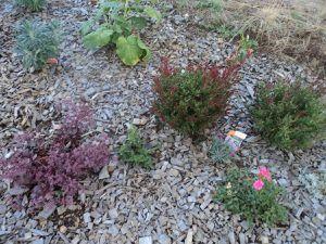 En août, un peu de fraîcheur, de pluie et la végétation reprend.
