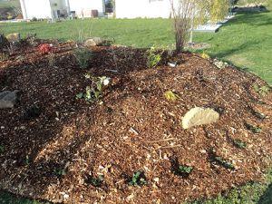 L'hiver passe. En mars 2016, nous plantons tout autour du massif plus de 50 pieds de fraisiers. Je plante encore des rosiers : Norita de chez Delbard, aux fleurs rouge sombre velouté, et 3 rosiers Guillot Generosa Ladurée, Reine Sammut et Rosomane Janon. Je plante également des bulbes d'anémones.