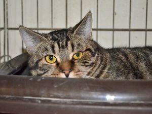 Il est adopté !!! : OLIVER, mâle castré de 9 mois