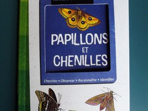 Le cycle du papillon (1)