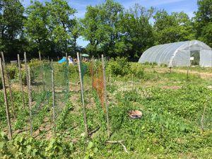 Belle journée au Jardin partagé du Percy: