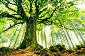 L'arbre qui chantait