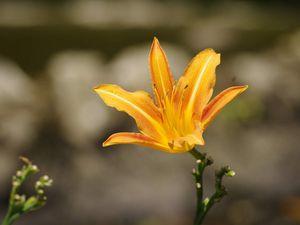 Le monde floral