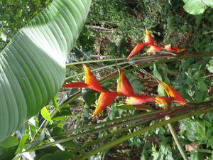 Les arbres de 40 à 50mètres de haut, une chauve souris, une fourmillière dans un arbre, les fleurs et les petites fourmis de Guyane