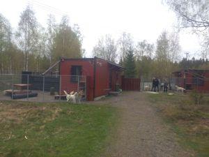 La pension canine et le transport des chiens
