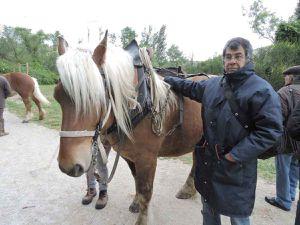 Cavaillon, chevaux de trait
