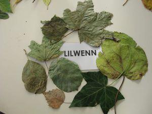 Prénoms et feuilles pour symboliser notre place chez Annaig
