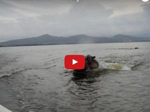 VIDEO - un bateau attaqué par un hippopotame au Keynia