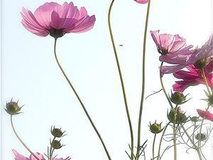 Les fleurs de l'automne