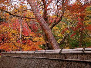 Novembre : Le rouge des érables MOMIJI 紅葉