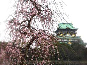 Les fleurs de pruniers Umé no Hana (梅の花)