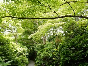 Kyôto : Arashiyama, la villa Ôkôchi Sansô 大河内山荘