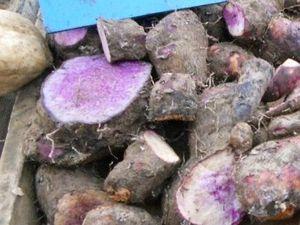 Patate douce (à gauche) Cambar mauve (au centre) Taro (à droite)