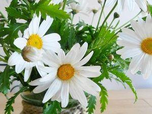 Anthemis roses et Marguerites blanches (Un grand merci à Mlle Christelle - Saint-Pierre, La Réunion - pour sa générosité.)
