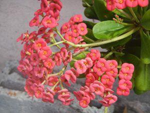 Vacances à La Réunion : le Sud sauvage