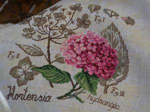 Etude Botanique: L'Hortensia
