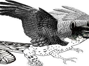 Amaru y Quetzalcoatl