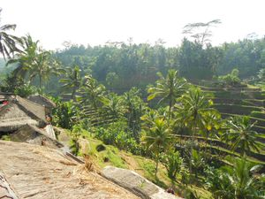 Terrasses de Ceking, Bali