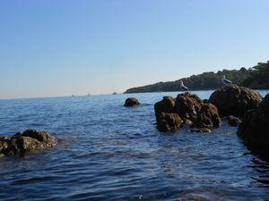 En kayak, on a d'autres points de vue!- Presqu'île de Giens