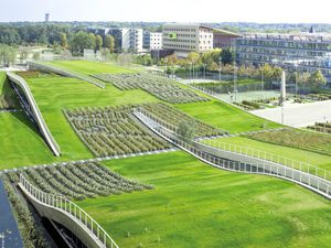 France requires all new buildings to have green roofs or solar panels