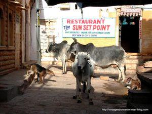 JAISALMER (Rajasthan)