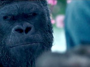 Qui est donc cette petite fille dont ce jeune gorille semble s'être épris  ?