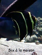 Musée Aquarium de Nancy
