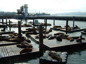 """Der """"Fishermans Wharf"""" war mein Favorit. Eine sehr relaxte Stimmung aus verpennten Robben, Straßenmusikanten, Meerblick und seafood."""