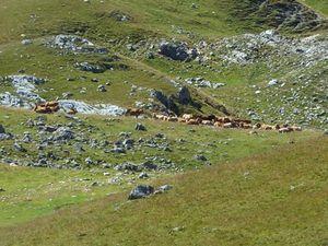 Briançonnais : Col de Trancoulette et Croix d'Aquila Dénivelé 613 mètres