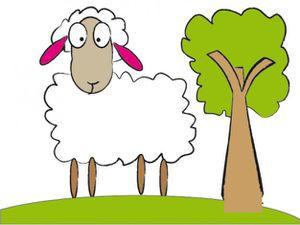 Linux et Loustik 2 agneaux Romanov à l'adoption chez sos chiens galgos