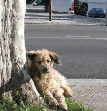 ATTENTION l'abandon de votre animal  peut vous en couter  30 000€ d'amende et 2 ans de prison