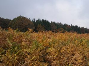 Splendeurs d'automne.