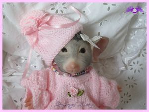 jolie tenue pour petite souris