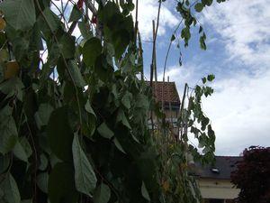 Un fond de scène végétal, avec la belle texture de la renouée du Japon dont quelques branches s'échappent vers le ciel.