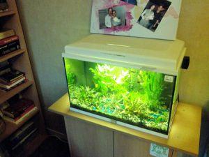 nouveaux pensionnaires dans l'aquarium