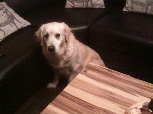 Bree et ses débuts. Son coin préféré, entre la table du salon et le canapé, elle s'y est réfugiée durant des heures.