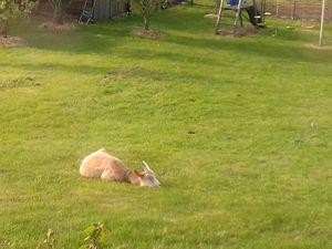 J'adore la pelouse et surtout les chardons mais peut être je vais bouder les orties!! ha non!!